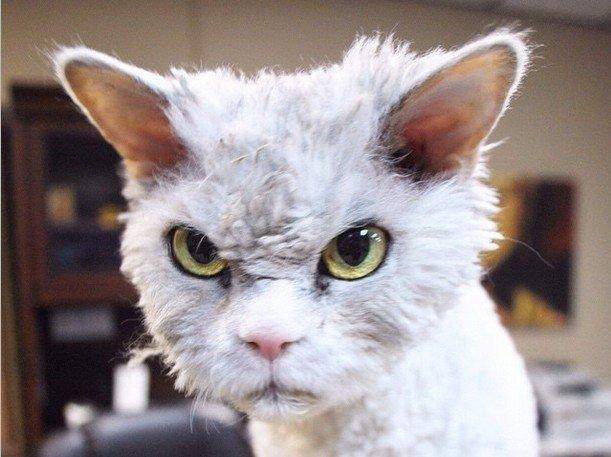 Jauns interneta varonis – pasaulē pats drūmākais kaķis Alberts