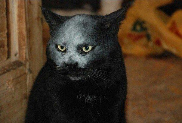 Jauns interneta briesmonis – kaķis, kurš izskatās pēc dēmona