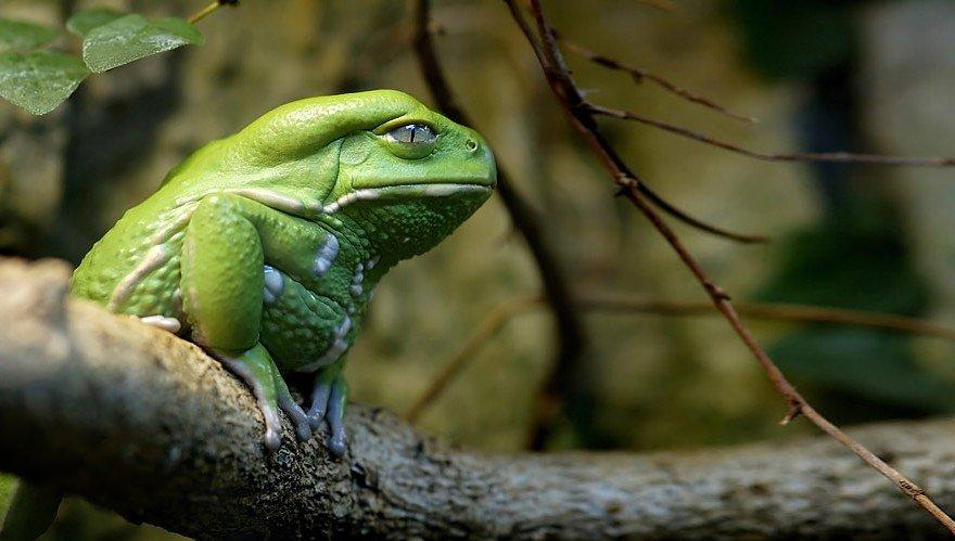 Pierādījums, ka vardes un krupji var būt ļoti stilīgi dzīvnieki