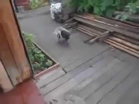 Suņu pacietībai arī izrādās ir mērs...