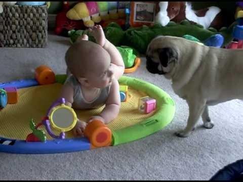 Suns izklaidé mazuli!...