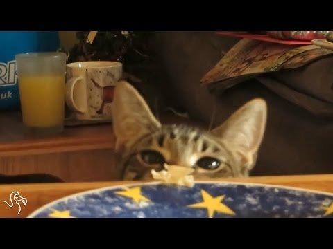 Kaķi zagļi...