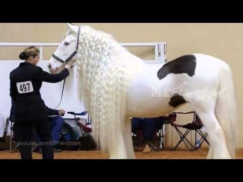 Pasaules skaistākie zirgi!...