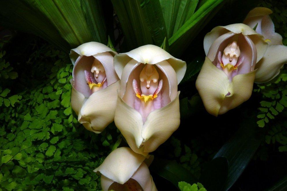 Puķes, kas izskatās pēc jebkā cita, tikai ne pēc puķēm