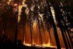 В этом году в Латвии сгорели 36 гектаров леса