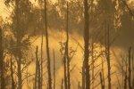 Ущерб молодому лесу от пожара на Адажском полигоне— 1,357 млн евро