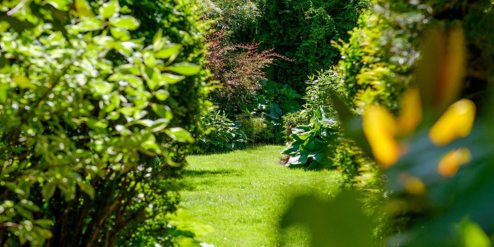 'Te ir mani džungļi'. Dzintras dārza pasaule Medemciemā