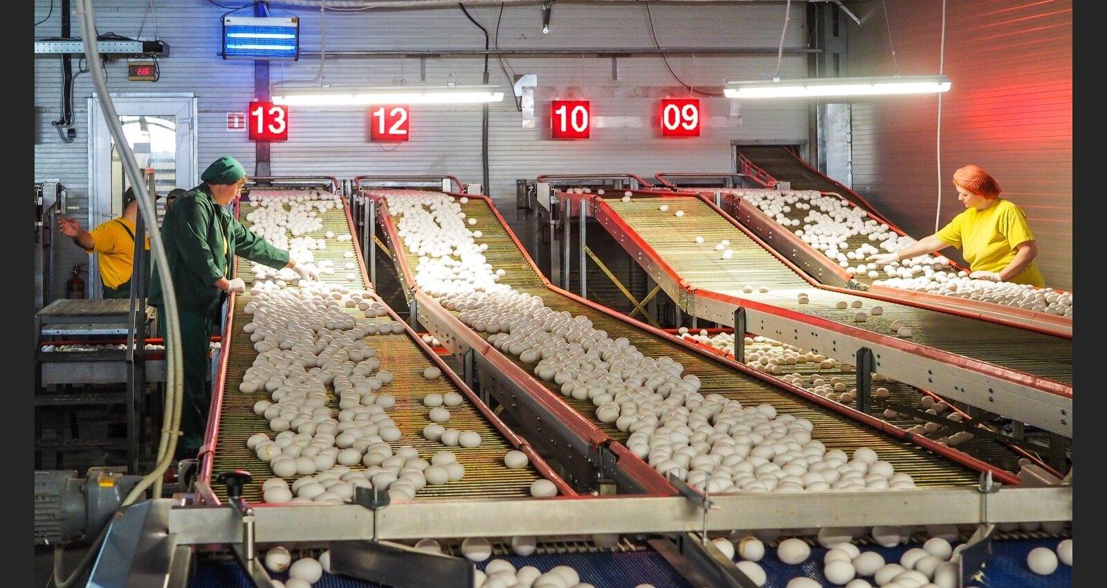 Эксклюзивный взгляд: как украинские яйца прокладывают путь на латвийский рынок