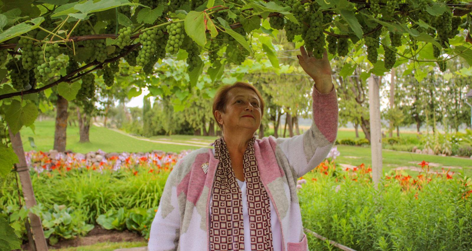 Dvietē krāšņi atdzimis Latvijas vīnogu 'pioniera' Paula Sukatnieka dārzs