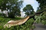 Ceturtdien Rīgā vēja ātrums brāzmās sasniedzis 19 metru sekundē