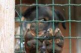 Aizvadītajā nedēļā suņi sakoduši vairākus nepilngadīgos