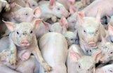 На кримулдской свиноферме Rukas ликвидировано все поголовье свиней
