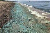 Zilaļģu dēļ neiesaka peldēties Vakarbuļļu pludmalē