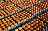 Зараженные фипронилом яйца обнаружены в 45 странах мира