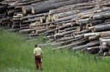 Латвия заработала миллиард евро на лесах и древесине