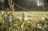 Pētījums par zirnekļu tīkliem, Raini un skaņu rīkiem – 2017. gada nozīmīgākie sasniegumi zinātnē