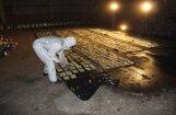 Kokoglēs atrastā kokaīna lietā apcietinātas divas personas
