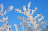 Decembra pirmajās dienās Latvijas austrumos sola salu līdz -26 grādiem