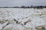 Vižņu drūzmas dēļ Daugavā pie Jēkabpils strauji paaugstinās ūdens līmenis