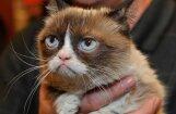 Первый в истории суд над мемом принес хозяйке угрюмой кошки сотни тысяч долларов