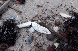 Jūra Papē atkāroti izskalo smakojošas vielas
