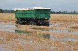 Lauksaimnieki: sējumi šoruden attīstījušies sliktāk; uz augstu graudu ražu nevar cerēt