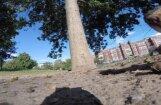 Video: Žiperīga vāvere nočiepj 'GoPro' kameru un nofilmē dzīvi kokos