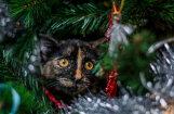 12 котов, которые думают, что они елочные украшения