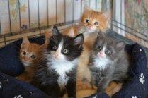 'Prātiņ, nāc mājās!' Patversmes darbinieces dvēseles kliedziens par rekordlielo kaķēnu skaitu
