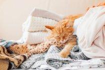 Kāpēc kaķiem patīk gulēt neparastās vietās