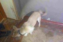 Viena pastaiga nedēļā – administratīvi vētīs suņa īpašnieka pārkāpumu
