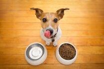 'Dogo' sāga: Ražotājs vēršas pret cietušo suņu saimnieku biedrību; ierosināts kriminālprocess par neslavas celšanu