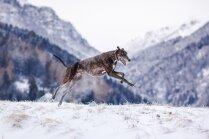 Desmit ātrākie suņi pasaulē