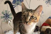 Mājas meklē aptuveni pusgadu vecā kaķenīte Sašiņa