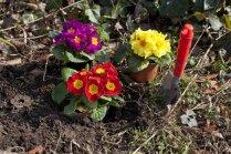 Kas darāms dārzā no 27. marta līdz 3. aprīlim?