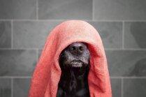 Soli pa solim: kā pareizi mazgāt suni