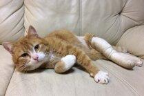 'Paldies no visas sirds!' Saziedoti līdzekļi ar skrotīm sašautā kaķīša ārstēšanai