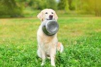 'Dogo' sāga: Ražotājs papildina tiesā iesniegto prasību pret veterinārārstiem