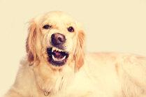 Kad slikta elpa nav no ēdiena jeb Kāpēc jārūpējas par suņa mutes higiēnu