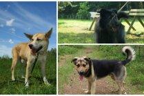 Mīlulis meklē mājas: individuālists Ķobis, sapņu suns Spaiks un draudzīgā Umka