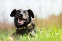 Patversme 'Dzīvnieku draugs' svin 15 gadu jubileju; aicina uz suņu salidojumu