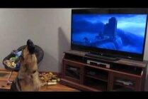 Video: Vācu aitu suns pauž atbalstu multenes varoņiem