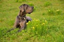 Vai noskaidrots garākais suns pasaulē?