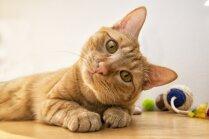 Aktuālas kaķu ķibeles, kuras risināt palīdz speciālisti