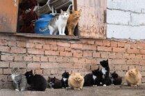 Ne visus klaiņojošos kaķus vajag glābt, uzskata speciālists