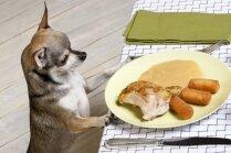 Kam jāpievērš uzmanība, iegādājoties suņu barību? Atbild veterinārārste