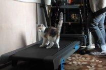 Video: Sportiska kaķenīte braši soļo pa trenažieri