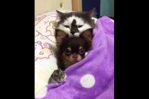 Foto: Suns, kaķis un kāmis – nešķirami dzīvnieciņi, kuri pat guļ kopā
