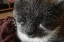 Foto: 'Raudošā' kaķenīte Čejene, kurai iekrāsojušās asaru straumītes