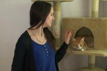 Veido mājiņas un meklē saimniekus. Divu meiteņu stāsti par palīdzību kaķiem